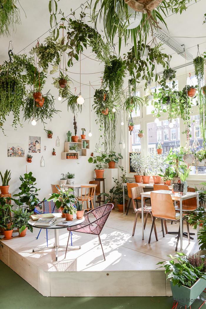 Wildernis-Amsterdam-Binti-Home